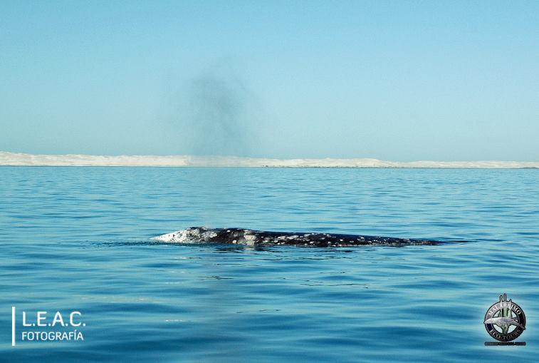 Ballenas-Whale Watching