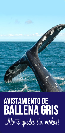 Avistamiento de ballena gris